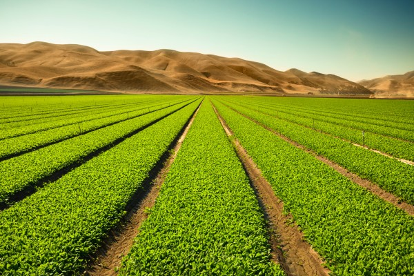 los productos fitosanitarios ayuda a conservar los cultivos y las plantas